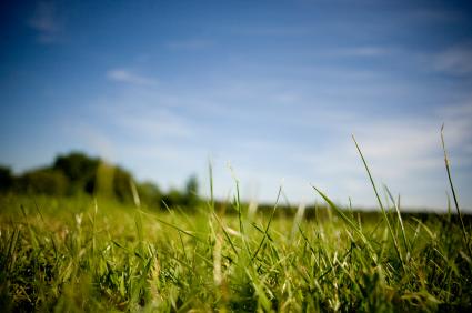 Organic Lawn Fertilization
