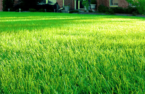 Lawn care vs lawn service companies br green for Landscaping services