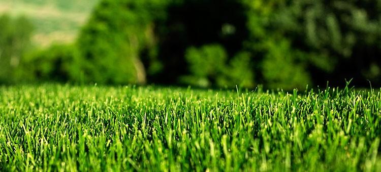 Organic Grass