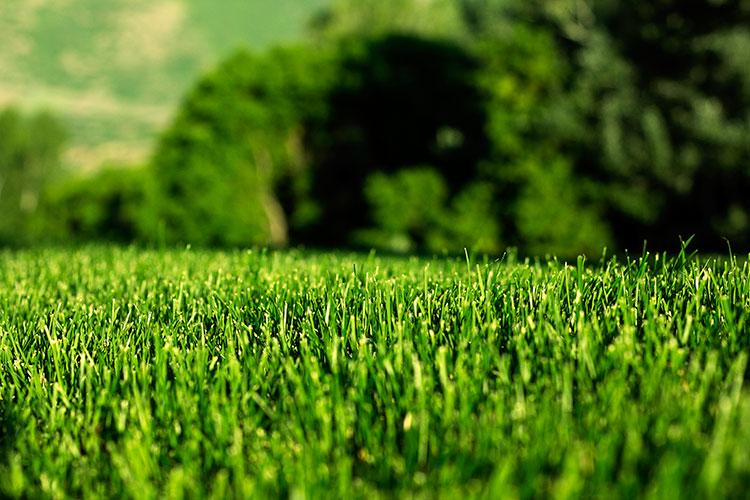 Green Grass Lawn Care Nebraska : Easy tips for organic lawn care
